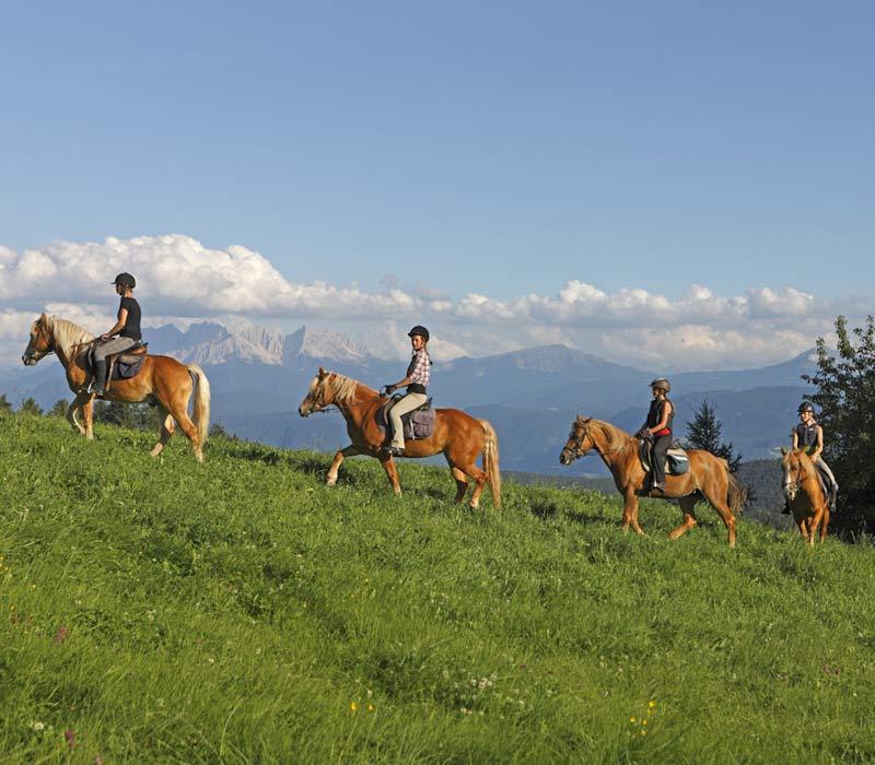 Paardrijden En Rijden In Zuid Tirol Rijden Vakantie Op