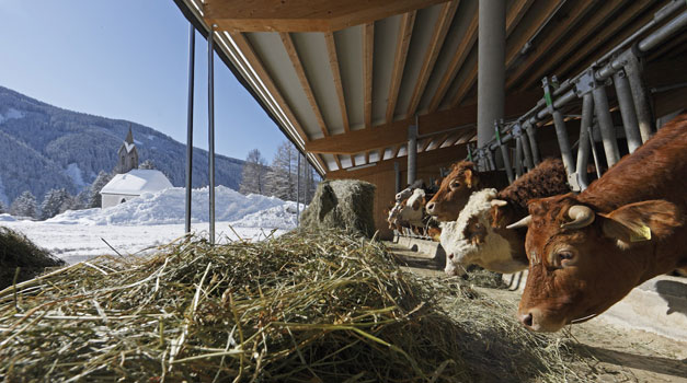 Leren Op De Boerderij Wintervakantie In Zuid Tirol